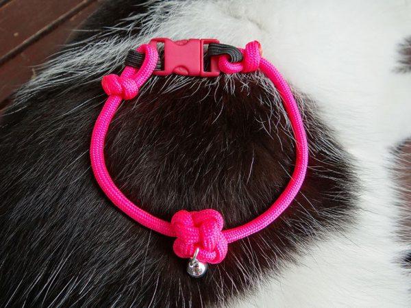 collier pour chat sécurisé