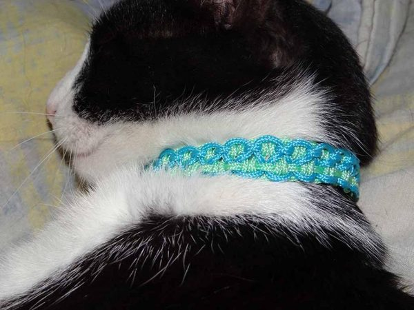collier pour chat